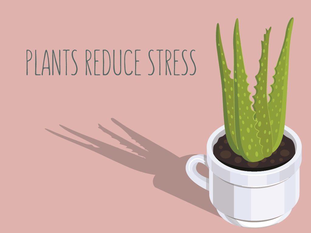 Plants Reduce Stress